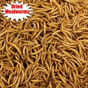 Wholesale Bulk Dried Mealworms for Wild Birds Food Blue Bird Chickens Hen Treats