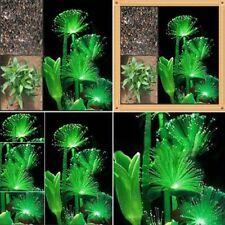 fiore fluorescente verde smeraldo 100pcs notte luce che emettono pianta semi NEW