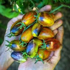 30 BRAD'S ATOMIC GRAPE TOMATO SEEDS 2020 (all non-gmo heirloom vegetable seeds!)