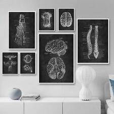 Human Anatomy Medical Wall Art Print Skeleton Organ Muscle System Canvas Poster