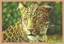 "Südafrika - Postkarte Leopard  ""The Big Five"" 2014 Neu  11,5 x 17 cm"