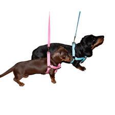 Colliers roses pour chiens moyens en nylon pour chien