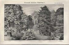 Lithografie 1908: HOCHWALD DEUTSCHER NIEDERUNG. I/II. Wald Holz Eiche Esche Erle