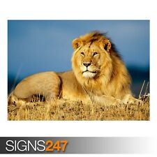 AFRICAN LION KING (3758) Animal Poster - Photo Poster Print Art A0 A1 A2 A3 A4