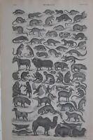 1877 Aufdruck Mammalia Camel Hund Wolf Bat Affe Nagetier Wildschwein