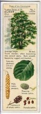 Black or European Alder Tree Alnus glutinosa 1930s Trade Ad Card