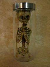 Fetus or Alien Torso in Glass Jar, Halloween Prop, New