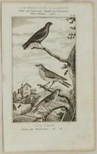BUFFON ORIGINALE UCCELLI BIRD UCCELLO BENGALINO ORGANETTI LINARIA CANNABINA 1850