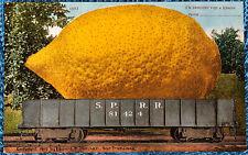 Exaggeration Postcard; Lemon on a RR Railroad Train Car Mitchell Publishing 1910