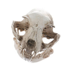 Resin Realistic Art Replica Animal Cat Skull Model Medical Party Ornament