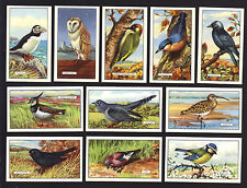 CIGARETTE CARDS. Gallaher Tobacco. BRITISH BIRDS. (Complete Set of 48). (1937).