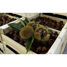 Castagne Fresche 5 kg sacchetto Azienda Agricola Biologica IGP CASTAGNA CUNEO