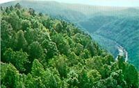 Pipestem WV Resort Bluestone Gorge View Postcard Unused (28489)