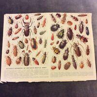 Vintage Book Print - Notable Members of Britain's Beetle Army