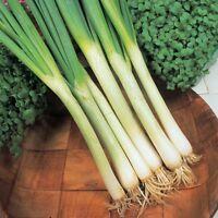 Kings Seeds - Onion White Lisbon Winter Hardy - 600 Seeds