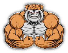 Muscular Bulldog Car Bumper Sticker Decal 5'' x 4''
