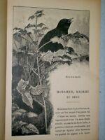 Labesse A TIRE D'AILES vers 1900 oiseaux ornithologie enfantina