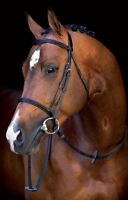 Horseware Ireland Mio Bridle With Reins Eco Friendly Leather Comfortable SBSB20