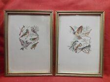 Coppia stampe acquerellate cm 20x27 Antikidea