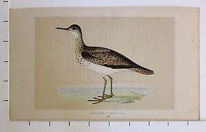 c1875 ANTIQUE PRINT ~ BARTRAM'S SANDPIPER HAND COLOURED British Birds Morris