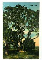 Macon Georgia Lanier Oak Linen Vintage Postcard