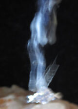 ring spell ritual kit magick summon how to become get haunted vampires vampyre