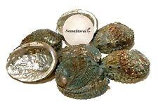 """Pink Abalone Sea Shell One Side Polished Beach Craft 4"""" - 5"""" (4 pcs) #Jc-11"""