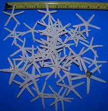 25 WHITE FINGER PENCIL STARFISH STAR FISH SHELL WEDDING CRAFTS ITEM # WSF1-25su