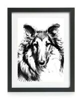 Rough Collie Picture Print Wall Art Poster Gift Antique Reprint A4 Lassie