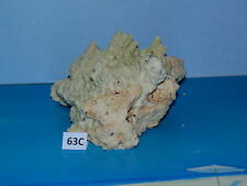 "7-1/2""  BEAUTIFUL REAL GREEN FIRE CORAL, BEACH  DECOR TROPICAL AQUARIUM #63C"