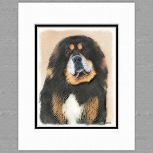 TIbetan Mastiff Dog Original Art Print 8x10 Matted to 11x14
