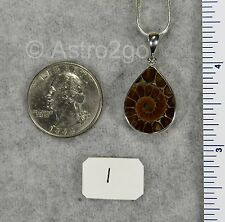 CUT AMMONITE PENDANTS $49 Sterling Silver Fossil Jewelry STARBORN CREATIONS NEW!