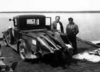 Michael Lerner And Tommy Gifford With Truck Full Of Tuna 1940 OLD FISHING PHOTO