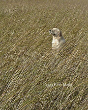 Golden Retriever Dog Lovers Fine Art Photography Greeting Cards Set/2 Free Ship