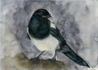 Magpie, Wild Bird Art. Wildlife Print from an Original Watercolour Painting
