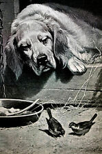 Simon Hound Dog in Doghouse House Sharing Food w Birds CHARITY 1890 Print Matted