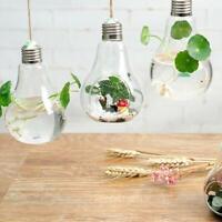 Light Bulbs Hanging   Terrarium Glass Vase Succulent  er Flower Z0F9