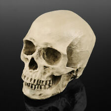 1:1 Life Size Human Anatomical Anatomy Resin Head Skeleton Skull Halloween Model