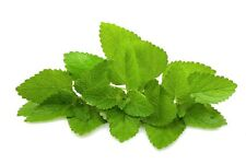 1000 Seeds of BIO Lemon balm Officinale / Lemongrass Plant Grass Aromatic