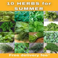 10 Herb Seeds For Summer Mint Parsley Chives Dill Basil Coriander Thyme Parsley