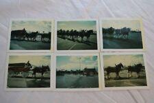 6 Vintage Polaroid Photos Budweiser Clydesdale Horse Team 841