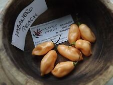 Habanero Peach Chili 5+ seeds