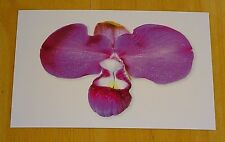 KEW ~ ORCHID POSTCARD ~ PERUVIAN GIANT SLIPPER ORCHID ~ ATWOOD, DALSTR... 1896