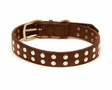 Rock and Roll Straight Dog Collar, Extra Small Size 8, Brown with Studs