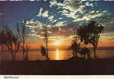postcard USA  California spellbound   unposted