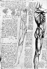 Leonardo Da Vinci Muscles of the Lower Extremity 1  Anatomy Poster Print Art