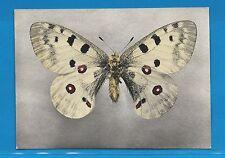 Carte Publicitaire Papillons Parnassius Apollo Montagnes d'Europe