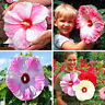 100PCS Mix colors Giant Hibiscus Flower Seeds Hardy,rare home flower for Garden
