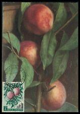 SAN MARINO MK 1958 FLORA OBST PFIRSICH FRUITS FRUIT MAXIMUM CARD MC CM am70