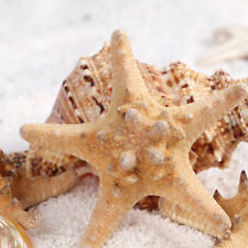 2Pc Natural Starfish Star Shell Aquarium Fish Tank Landscape Decor DIY Ornaments